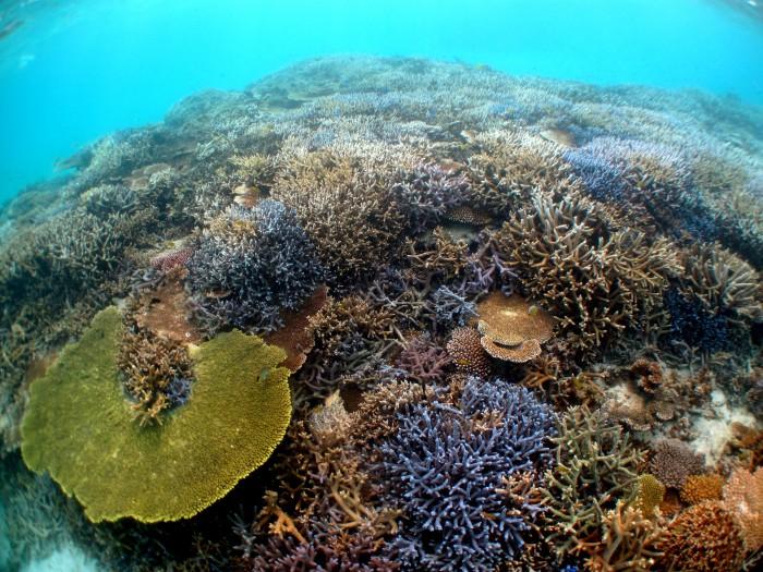 サンゴ礁も色鮮やかで美しい。時間を忘れて夢中になるはずです!