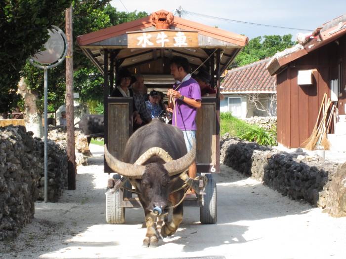 水牛車に乗って竹富島観光
