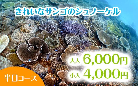 ご家族大歓迎!きれいなサンゴのシュノーケル【半日コース】