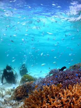 水中風景4