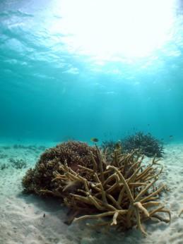 水中風景5
