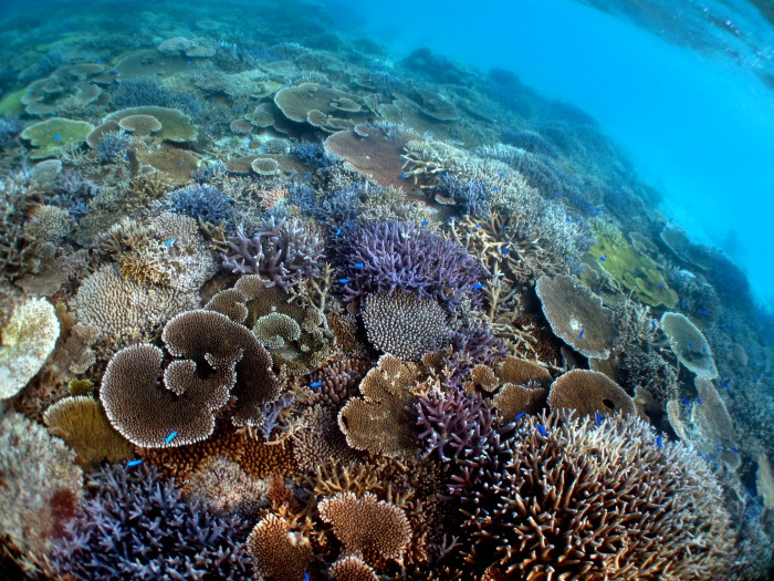 竹富島の美しいサンゴ礁に癒されます。