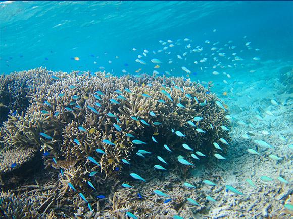 カラフルな熱帯魚もいっぱい!