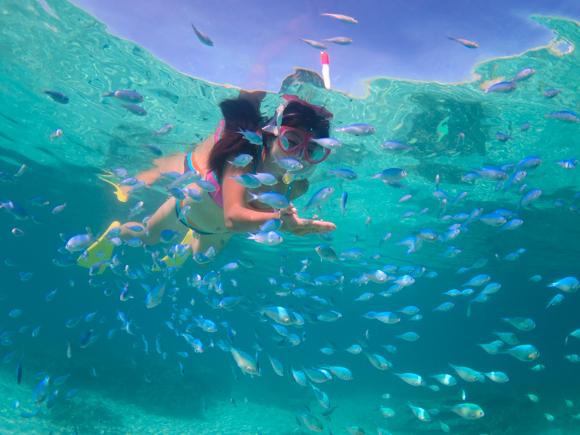 ウミガメ以外にももちろんカラフルな魚がいっぱい